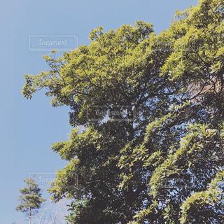 庭の写真・画像素材[346414]