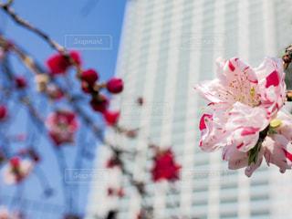 花の写真・画像素材[418511]