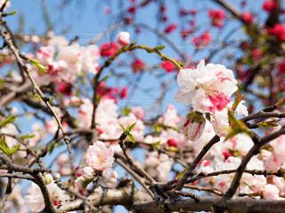 花の写真・画像素材[418512]