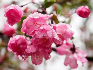 花の写真・画像素材[425832]