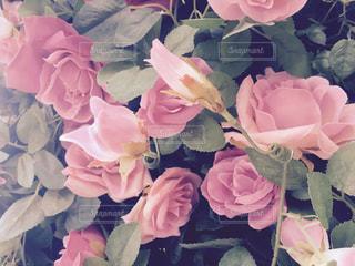 花束の写真・画像素材[346462]