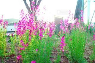 花の写真・画像素材[346584]