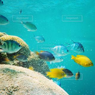 海の写真・画像素材[351137]