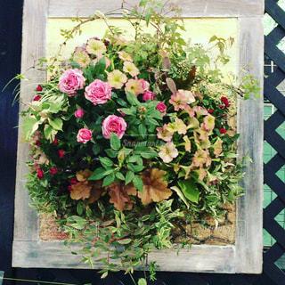 花の写真・画像素材[346622]