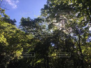 木漏れ日の写真・画像素材[812722]