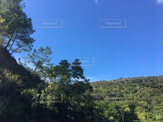背の高い木の写真・画像素材[812723]