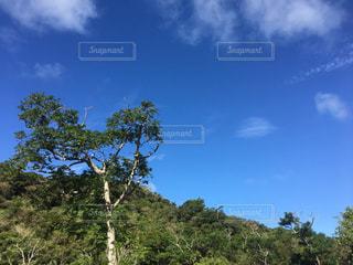 森林と青空の写真・画像素材[812724]