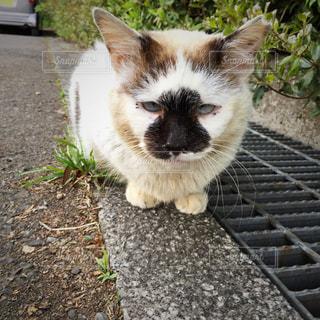 猫 ネコ ねこの写真・画像素材[346690]