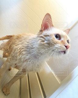 風呂の写真・画像素材[346693]