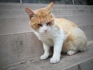 猫 ネコ ねこの写真・画像素材[346695]