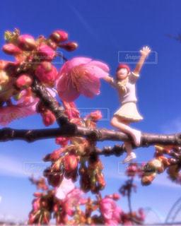 桜 - No.346689