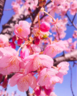 春 - No.347105