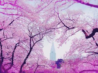 桜 - No.347693
