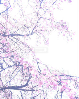 春 - No.393397