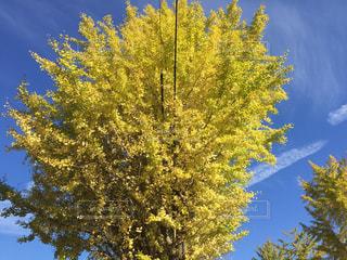 近くの木のアップの写真・画像素材[842425]