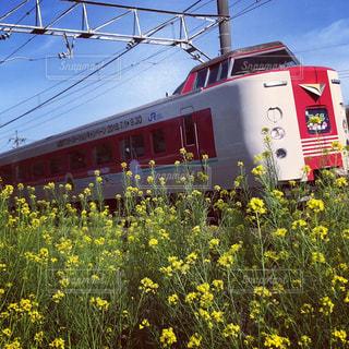 菜の花と特急やくもの写真・画像素材[1195473]
