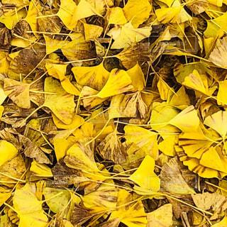 黄金の花の束の写真・画像素材[1775253]