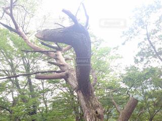 木の写真・画像素材[677137]