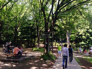公園の写真・画像素材[677147]
