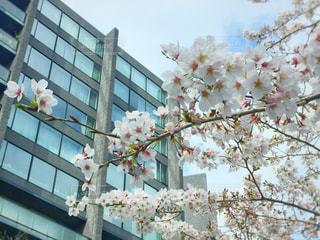 春の写真・画像素材[427374]