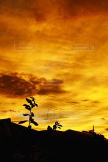 朝焼けの空の写真・画像素材[2337187]