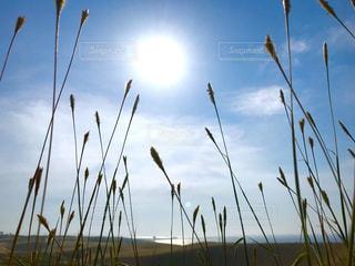 青い空と草木の写真・画像素材[2356351]