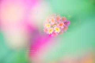 花の写真・画像素材[352068]