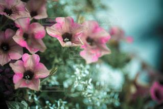 花の写真・画像素材[352087]