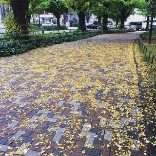 秋の写真・画像素材[347412]