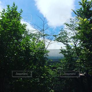 風景の写真・画像素材[347416]