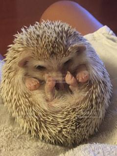 動物の写真・画像素材[347157]
