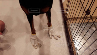 No.349283 犬