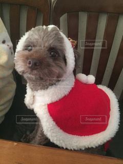 犬の写真・画像素材[349760]