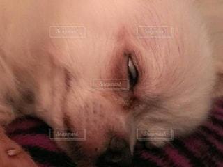 犬の写真・画像素材[349943]