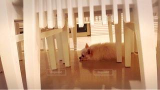 犬 - No.351065