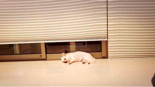 犬 - No.351072