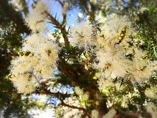 花の写真・画像素材[351240]