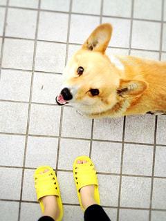 犬の写真・画像素材[351628]