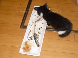 猫の写真・画像素材[351980]