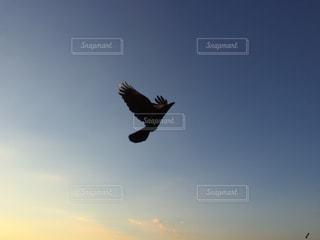 鳥の写真・画像素材[347200]