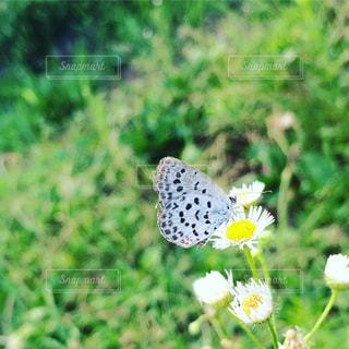 庭の写真・画像素材[347218]
