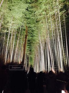 京都の写真・画像素材[347258]
