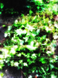 森の写真・画像素材[350243]
