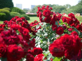 近くの花のアップの写真・画像素材[893308]
