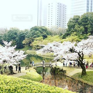 庭園の人々 のグループの写真・画像素材[938473]