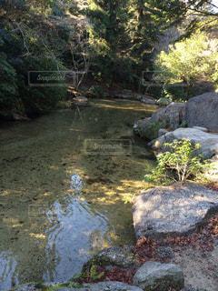 自然の写真・画像素材[348675]