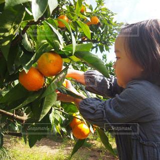 果物の前に立っている小さな男の子の写真・画像素材[2766376]