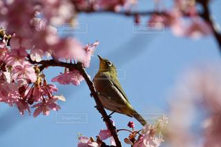 春の写真・画像素材[351337]