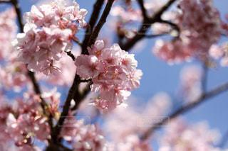 花の写真・画像素材[362686]