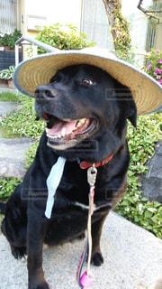 犬の写真・画像素材[558968]